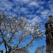 Weltkulturerbe in Nord-Luzon: Vigan, Kordillera Reisterrassen, Santa Maria und Paoay mit UNESCO Status